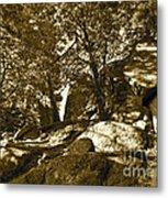 Rocks And Trees 1 Sepia Metal Print