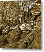 Rocks And Trees 2 Sepia Metal Print