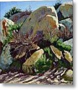 Rocks And Weeds II Metal Print