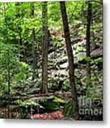 Rocky Forest Of Chatfield Metal Print