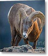 Rocky Mountain Big Horn Ram Metal Print