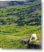 Rocky Mountain Goat Glacier National Park Metal Print