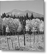Rocky Mountain High Country Autumn Fall Foliage Scenic View Bw Metal Print