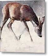 Roe Buck - Winter Metal Print by Mark Adlington