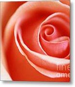Romantic Rose Metal Print