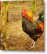 Rooster Farm Metal Print