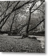 Rooted Within The Gravel Metal Print