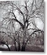 Roots And Flutes  Metal Print