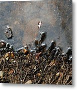 Roots In Water Metal Print