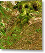 Roots Of A Tree At Ciucaru Mare Forest Metal Print