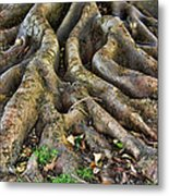 Roots Of Glory Metal Print