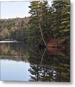Rope Swing On Bear Creek Lake Metal Print