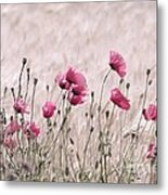 Pink Poppy Field  Metal Print