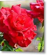 Rosas Roja Metal Print