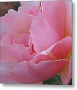 Rose 01 Metal Print