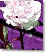Rose 108 Metal Print