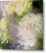 Rose 151 Metal Print by Pamela Cooper
