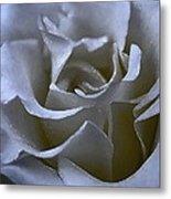 Rose 156 Metal Print