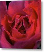 Rose 157 Metal Print