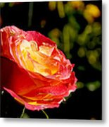 Rose After A Rain Shower Metal Print