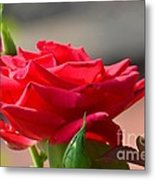 Rose And Her Buds Metal Print
