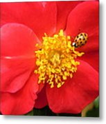 Rose And Visitor Metal Print