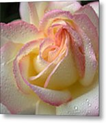 Rose Blush Metal Print