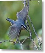Rose Breasted Nuthatch Flying Metal Print