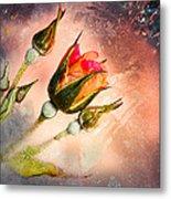 Rose Creation Metal Print