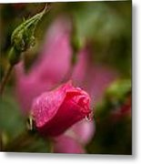 Rose Drop Metal Print