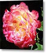Rose Floral Fine Art Prints Pink Roses Flower Metal Print