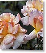 Rose Flower Series 7 Metal Print