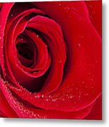 Rose Macro Wet 1 C Metal Print