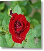 Rose Mist Original  Metal Print