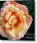 Rose Of Many Pastels Metal Print
