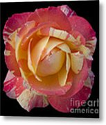 Rose On Black Metal Print