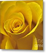Rose Poetry Metal Print