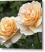 Rose Rosa Sp Just Joey Variety Flowers Metal Print
