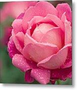 Rose (rosa 'star Of The Nile') Metal Print