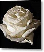 Rose Silver Anniversary Metal Print