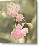 Rose Vine Metal Print