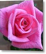 Rose With Droplets Metal Print