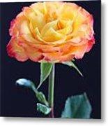 Rose3 Metal Print
