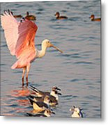 Roseate Spoonbill At The Bay Metal Print