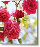 Roses Metal Print by Gal Ashkenazi
