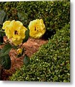 Roses In The Hedge Metal Print