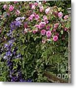 Roses On The Fence Metal Print
