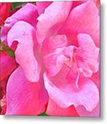 Roses Perfectly Pink Metal Print