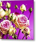 Roses (rosa Sp.) Metal Print