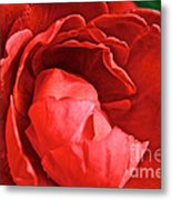 Rosie Red Metal Print